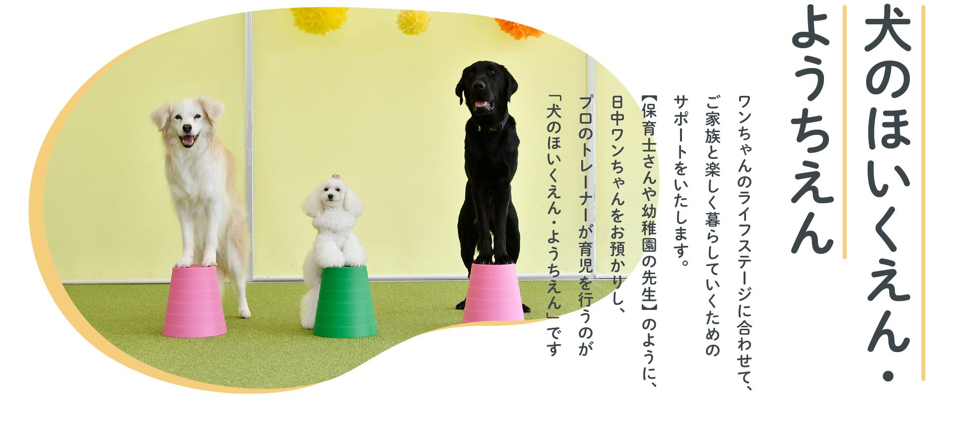 犬のほいくえん・ようちえん ワンちゃんのライフステージに合わせて、ご家族と楽しく暮らしていくためのサポートをいたします。【保育士さんや幼稚園の先生】のように、日中ワンちゃんをお預かりし、プロのトレーナーが育児を行うのが「犬のほいくえん・ようちえん」です
