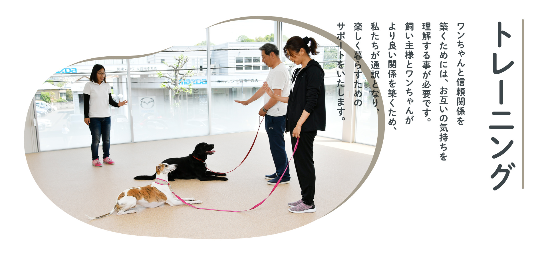 トレーニング base dog training school